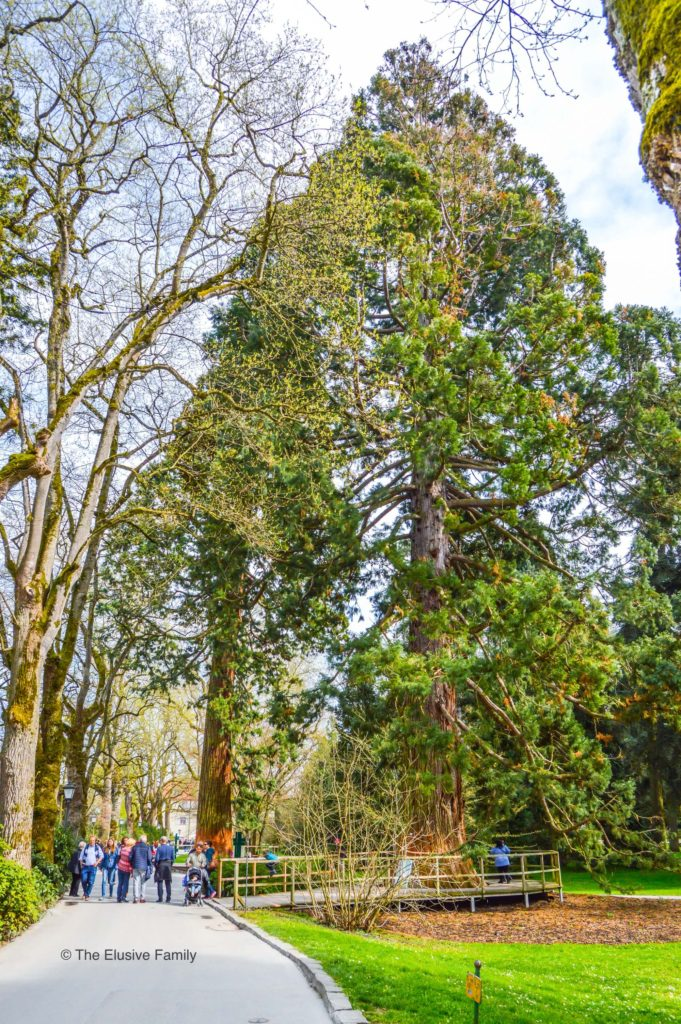 Mainau Sequoias Walkway