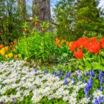 Mainau Island: A Guide to Visiting Flower Island (Insel Mainau)