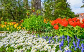 Mainau Island Flowers