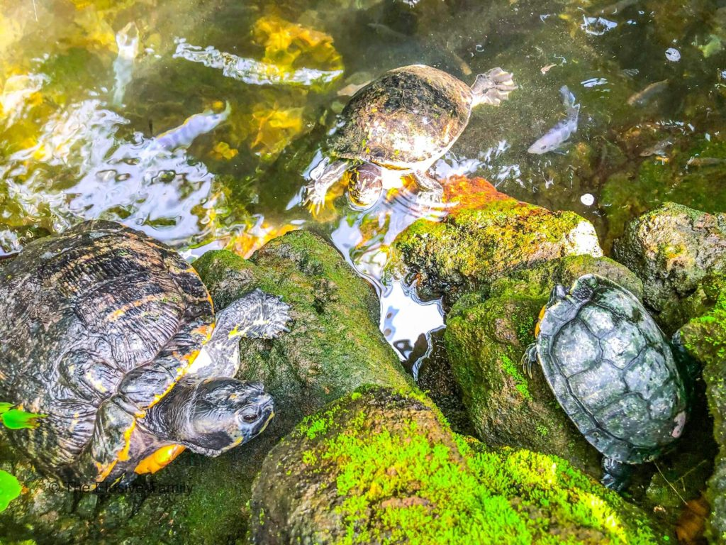 Mainau Island Turtles at Butterfly House